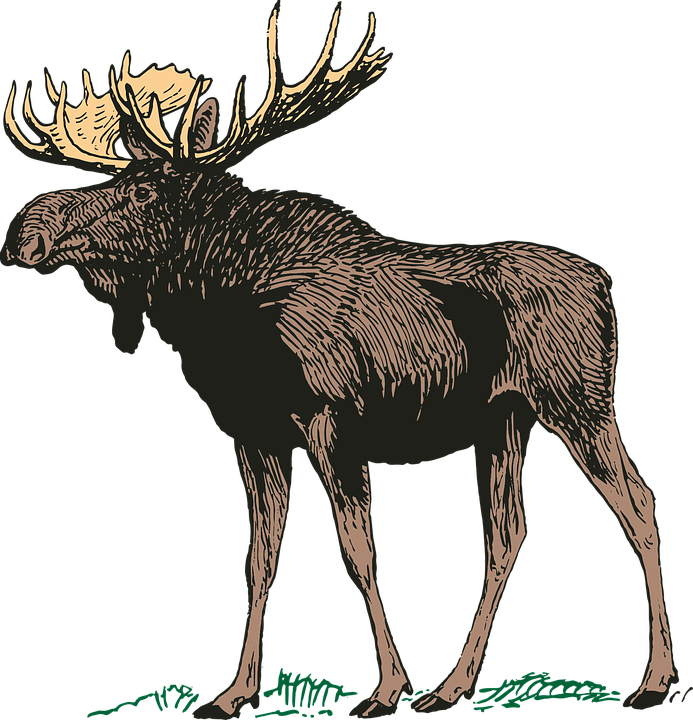 Moose Images Pixabay Download Free Pictures