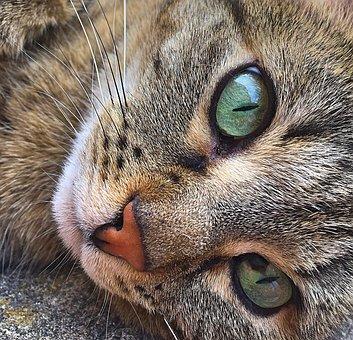 obrázok mokré čierne mačička eben log porno