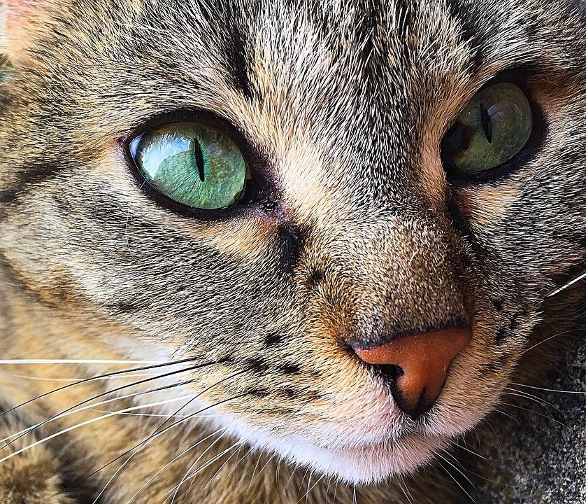 Zvieracie hryzadlo – mačička. Zvierací utešiteľ z najmäkšej Boa tkaniny s dvomi hryzadlami poteší a upokojí vaše dieťatko.