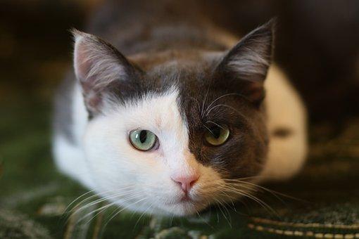 Katze, Haustier, Home, Zimmer, Kätzchen