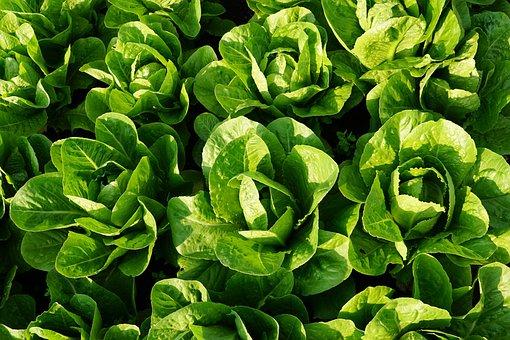 Salad, Green, Eat, Fresh, Vitamins