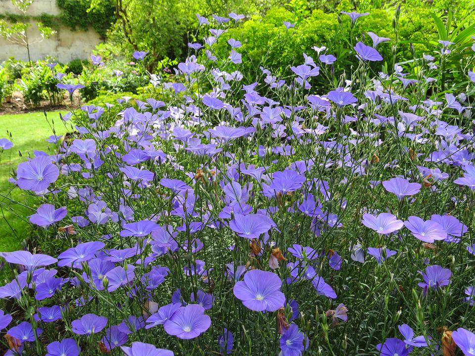 Blue Flowers Garden English Summer Floral