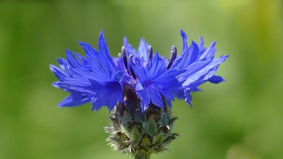 101+ Gambar Bunga Dari Biji Bijian Kekinian
