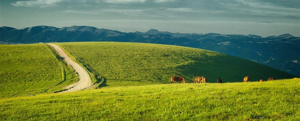 Umbria, Italy, Monte Subasio, Horses, Pastures