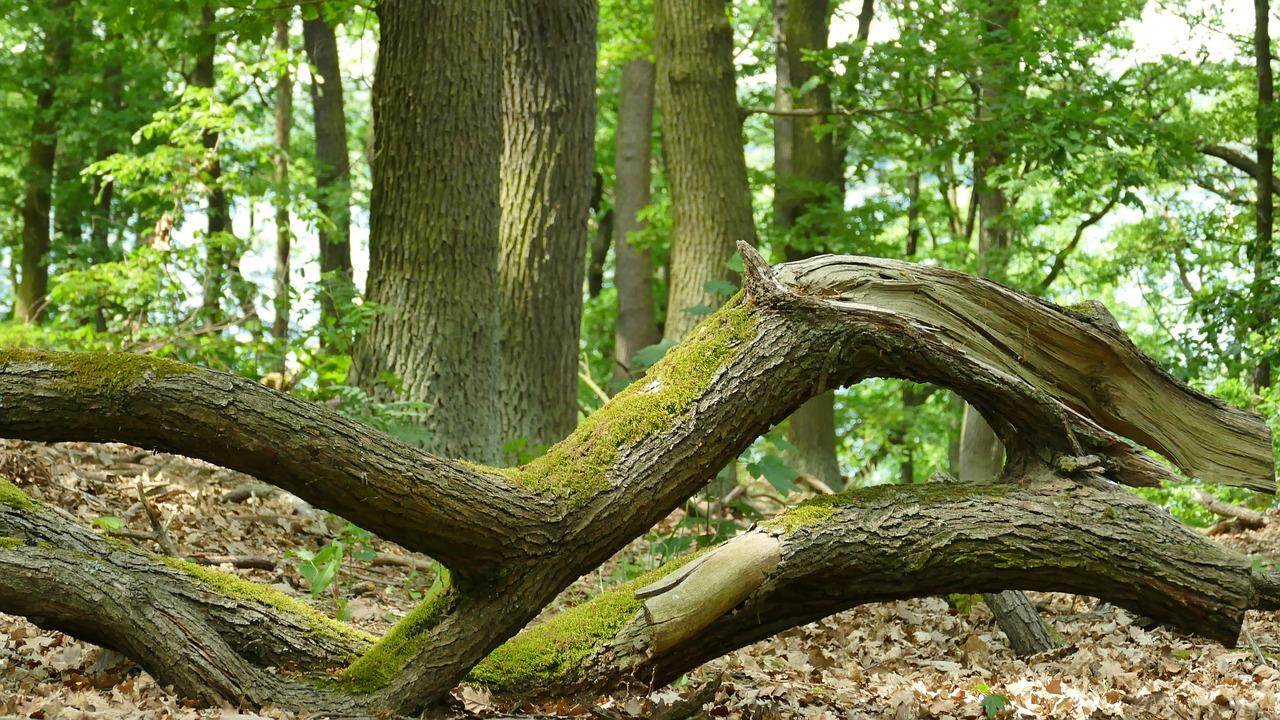 лежащее дерево картинки запросу водонепроницаемый чехол