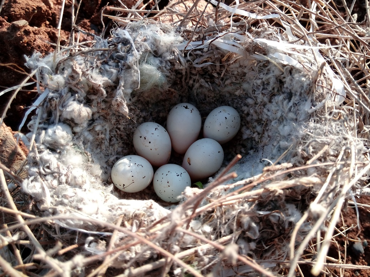 Яйцо в гнезде картинка