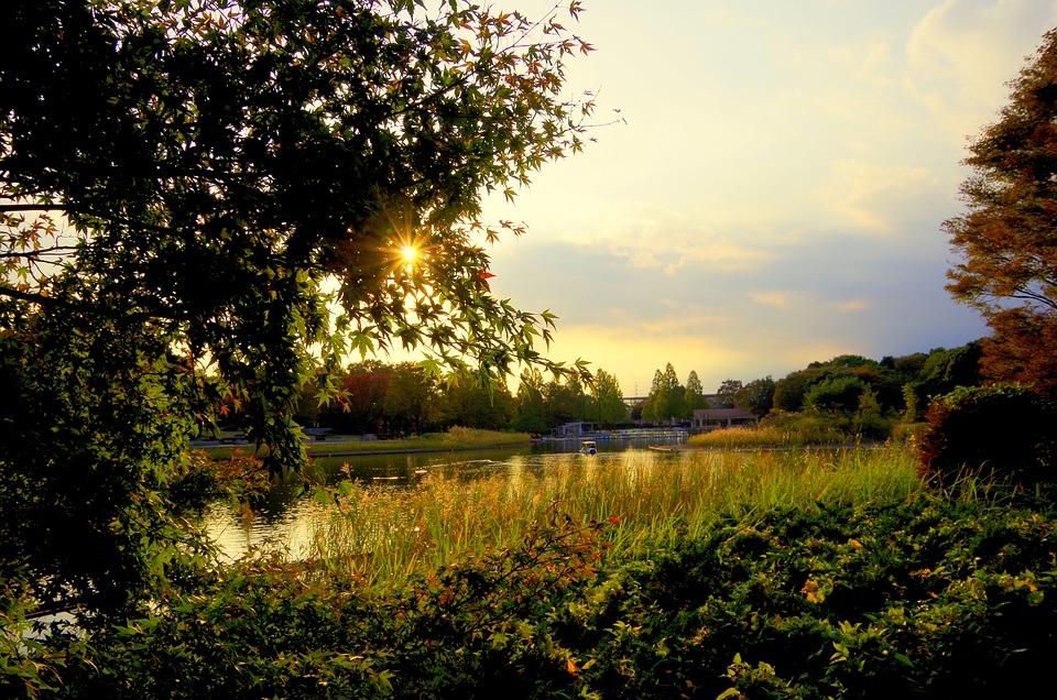 夕方, 湖, 日本, 日暮れ, 空, 水面, 風景
