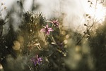 flowers, moody, dull