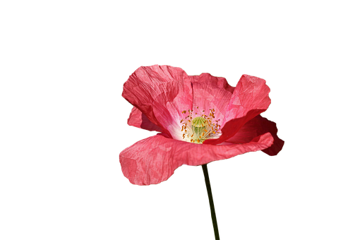 Red poppy images pixabay download free pictures poppy red flower spring red flowers mightylinksfo