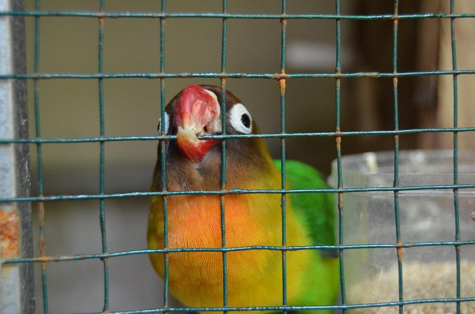 Love Bird Gambar Unduh Gambar Gambar Gratis Pixabay