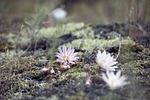 flower, wildflower, nature