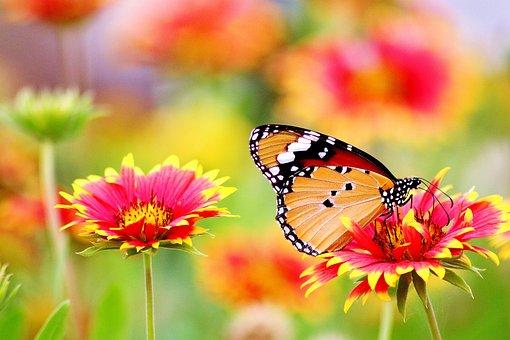 花, 赤, 自然, 植物, 夏, 庭, 春, 葉, 色, ブルーム, 植物学