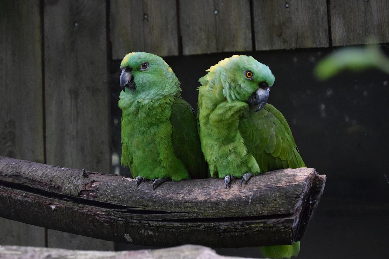 Милые картинки с попугаями
