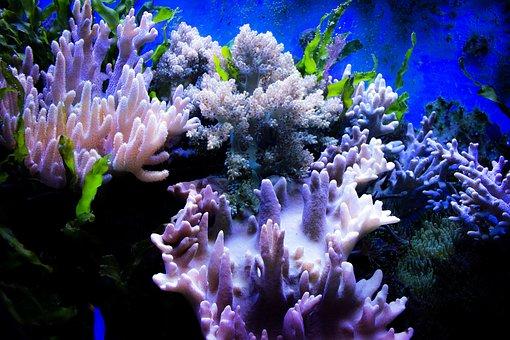 Corallo, Acqua, Colore, Pietre, Acquario