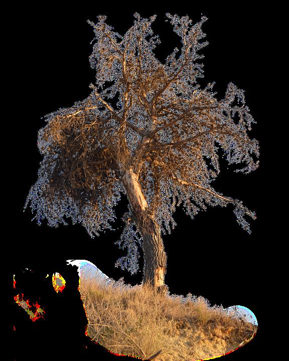 Christmas Tree For 2017