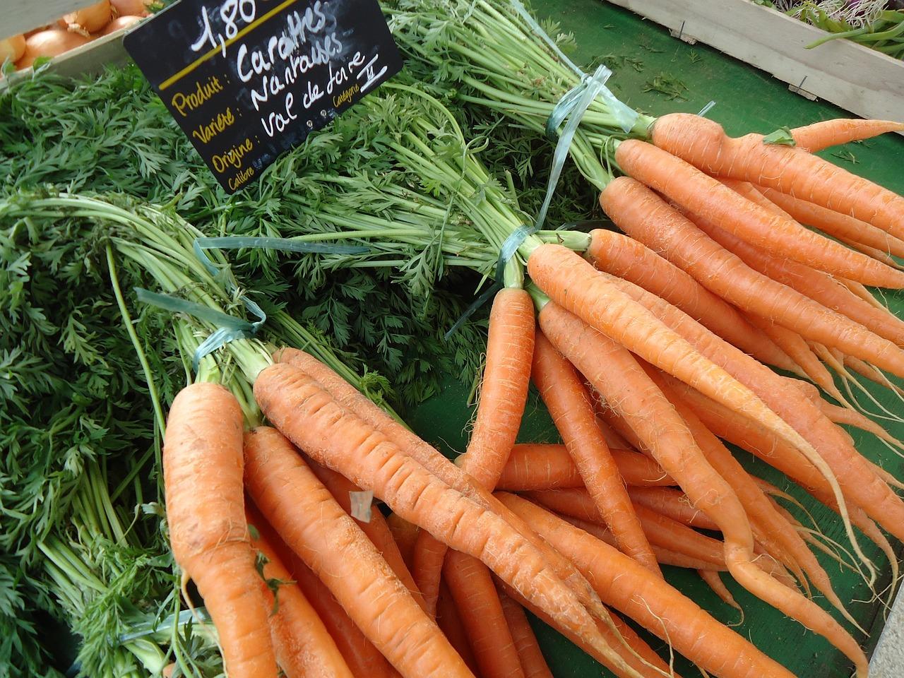 Все о моркови картинки