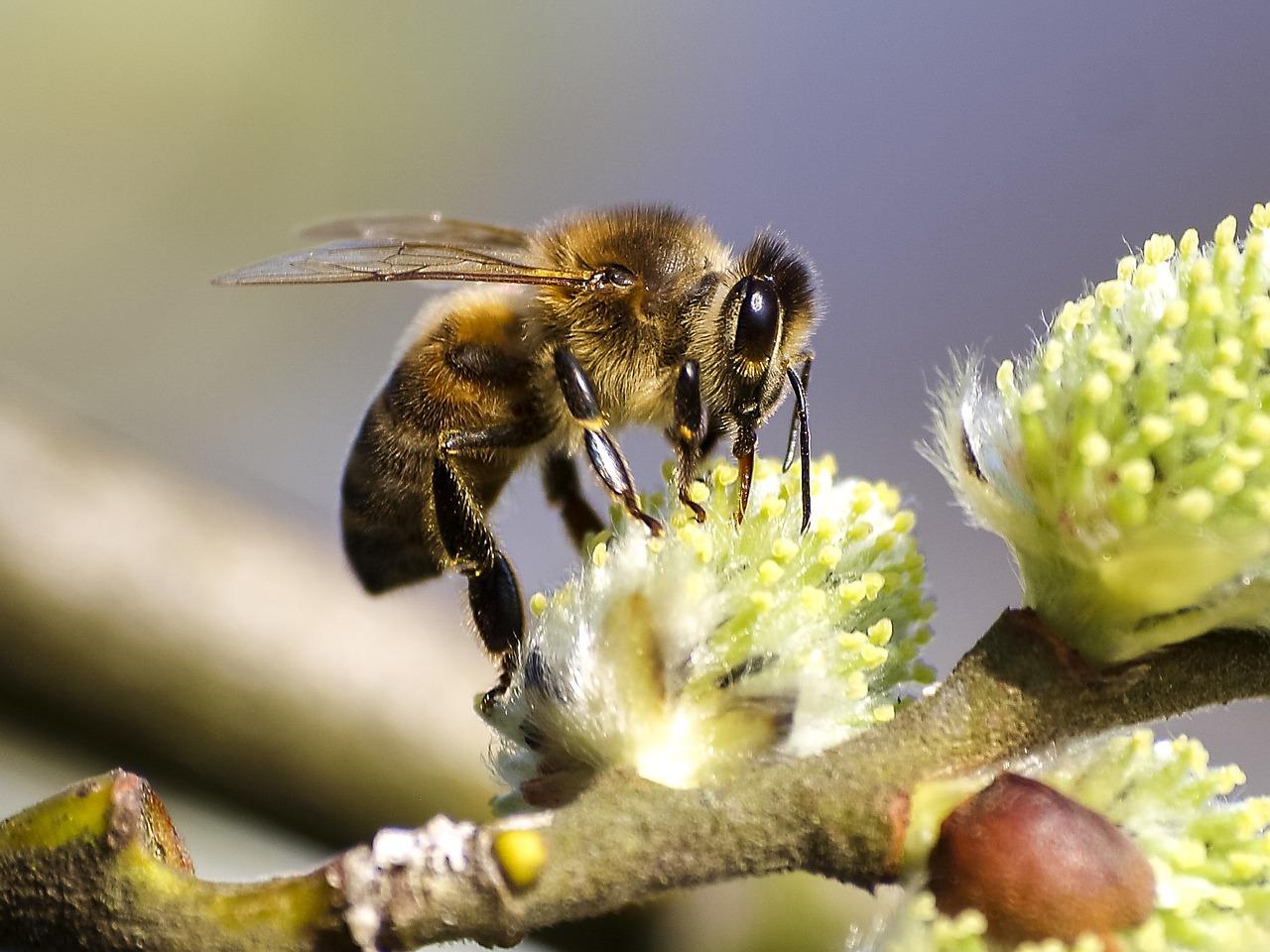 Открытки немецком, пчелы фото картинки