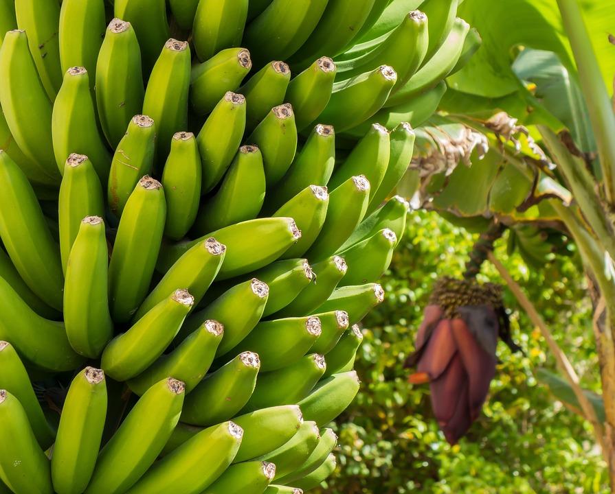 Banana Blossom Bloom Free Photo On Pixabay