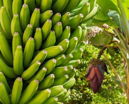 バナナ, 花, バナナの木