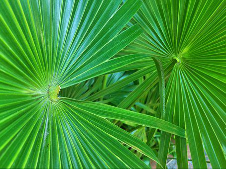 Palm Leaves Fronds Trees