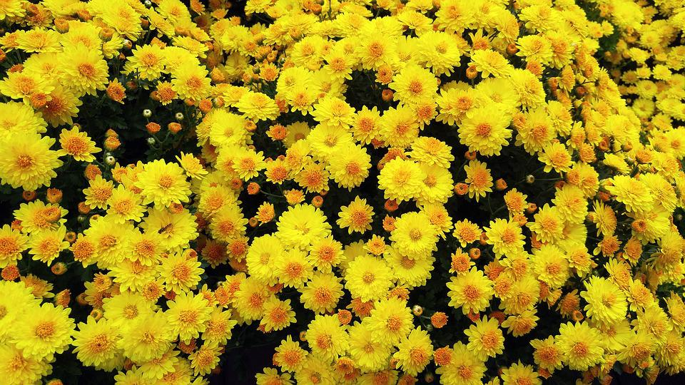 Flowers yellow flower plants free photo on pixabay flowers yellow flower plants nature tabitha spring mightylinksfo
