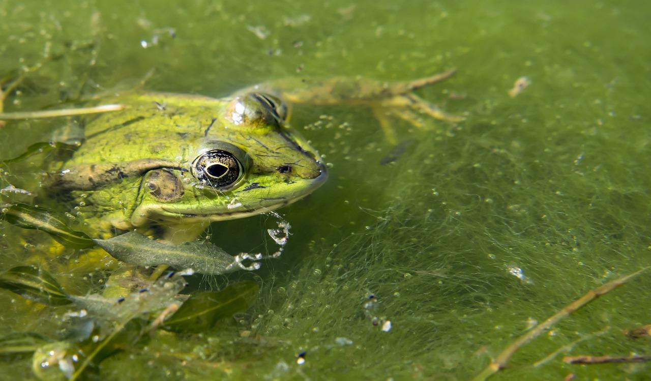 создать картинки с лягушками и рыбками предлагаем