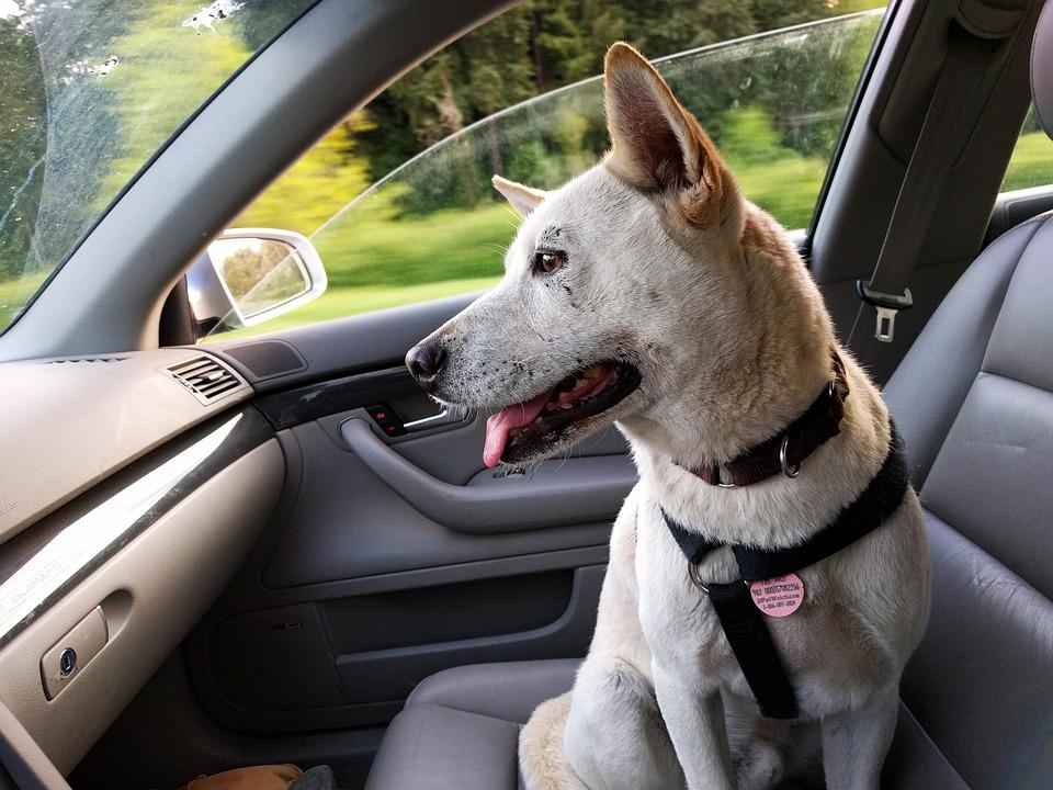 En verano, no dejes a tu perro en el coche