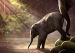 słoń, młody, watering hole