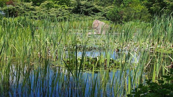 Water, Blackjack, Landscape, Nature