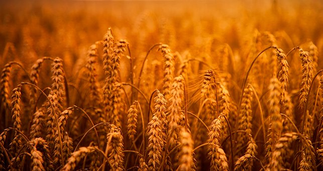 agriculture and