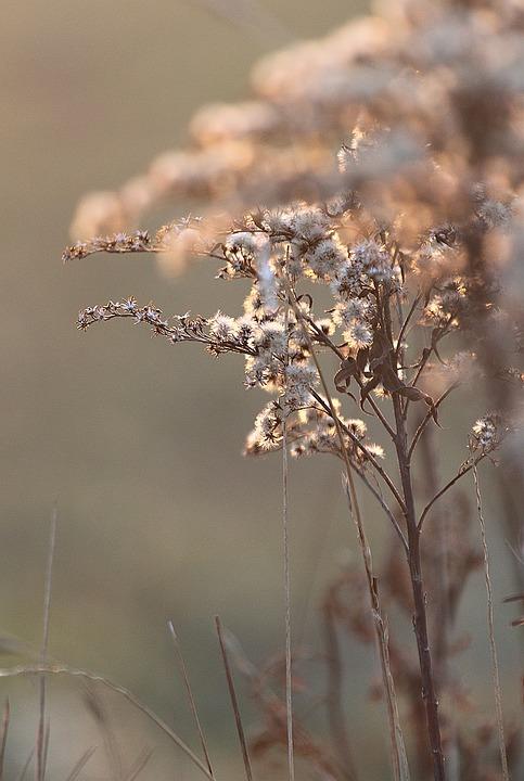 Pflanze Blumen Frühling März Kostenloses Foto Auf Pixabay