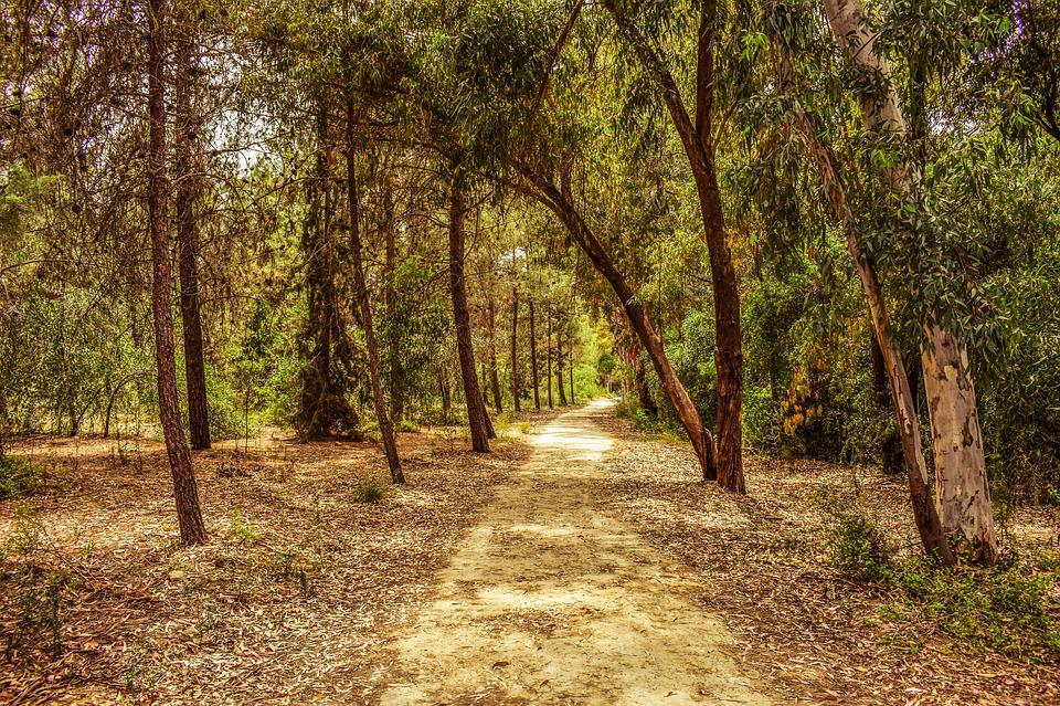 Forest, Park, Trees, Nature, Landscape, Scenery, Wood