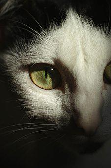 Cat, Eye, Nature, Whisker, Cat Eye