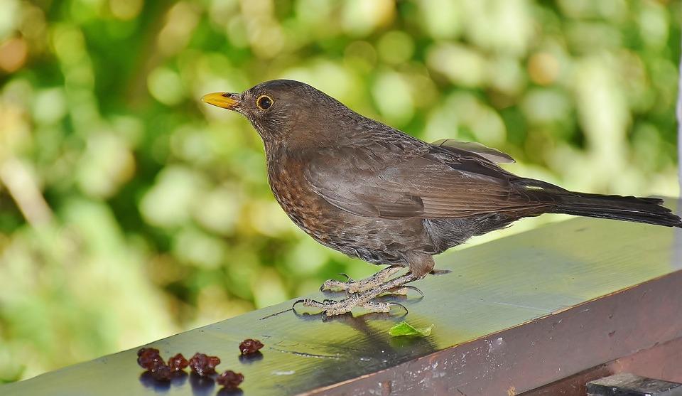 Ženy majú veľké vtáky