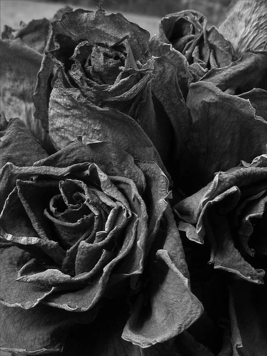 Muertos Rosas Blanco Y Negro Foto Gratis En Pixabay