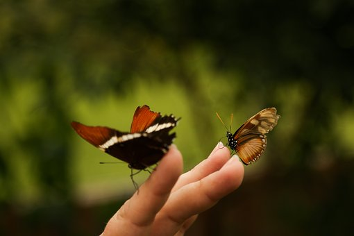 Mariposa, Insecto, Naturaleza, Ai, Bicho