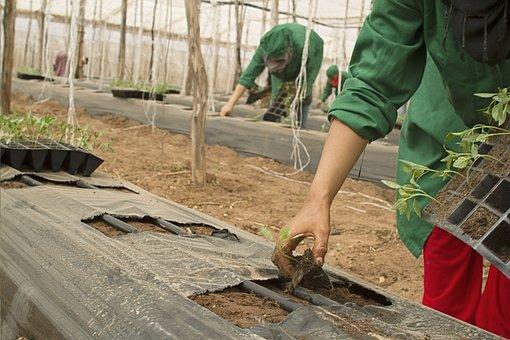Agricultura, Bio, Granja, Potencia