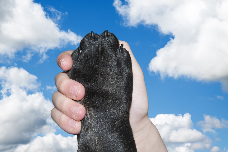 Hund, Pfote, Hand, Liebe, Freundschaft, Freunde, Halten