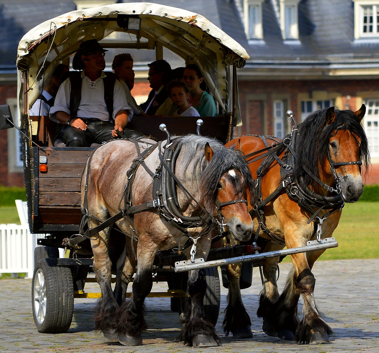 Draft horse drawn cart