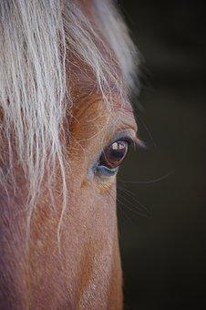 Look, Horse, Half-Line, Head, Close Up