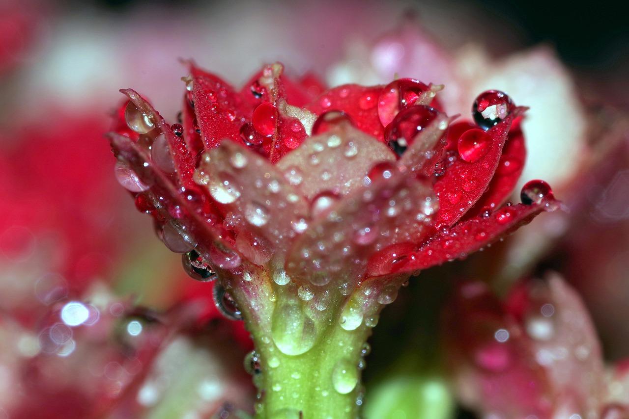 обычные картинки цветы с каплями росы останьтесь
