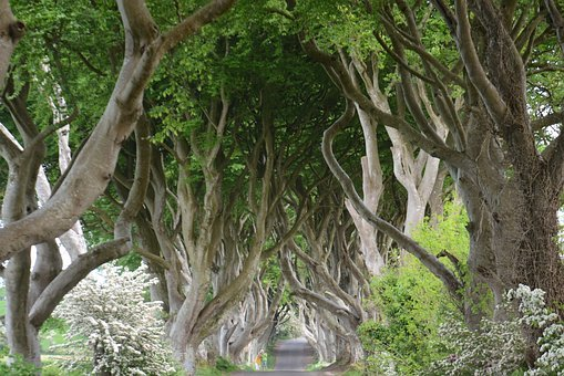 Nature, Irlande, Hêtre, Dark Hedges