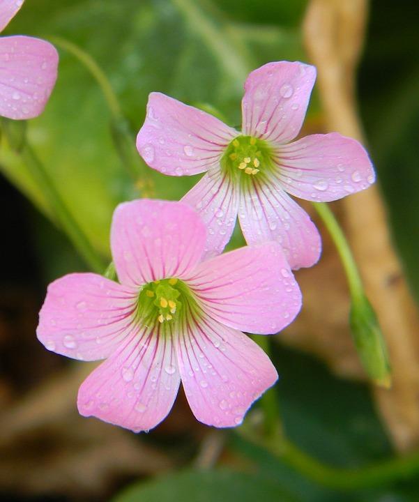 Flor Rosa Naturales Jardin Flores Foto Gratis En Pixabay
