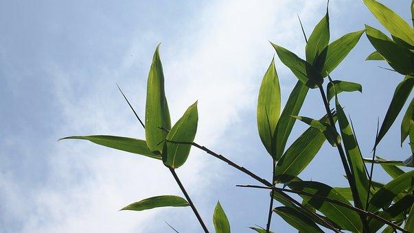竹, 竹葉, 青空, スカイ