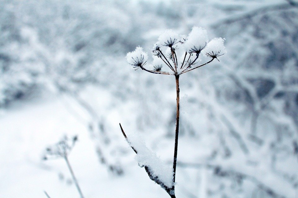 Photo Collection Winter Flowers Picture Free