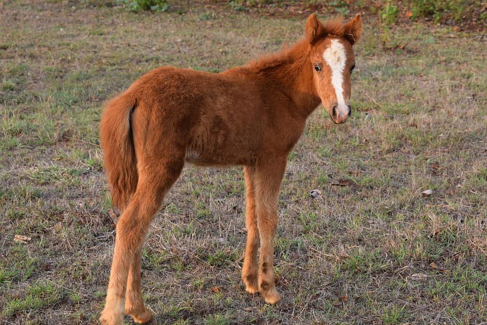 Mini Horse Animal Baby Free Photo On Pixabay