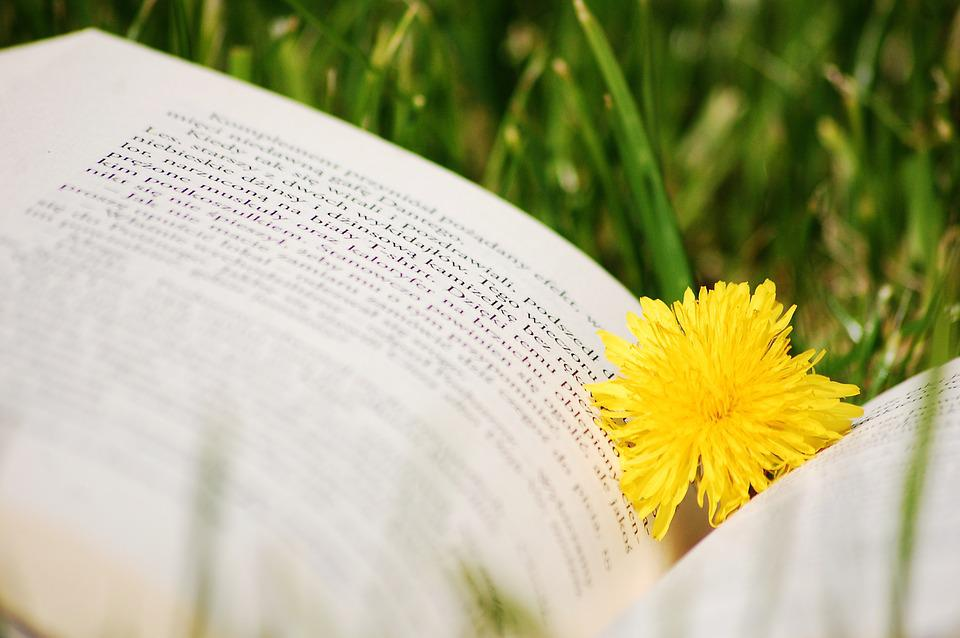 Book, Sonchus Oleraceus, Nature, Grass
