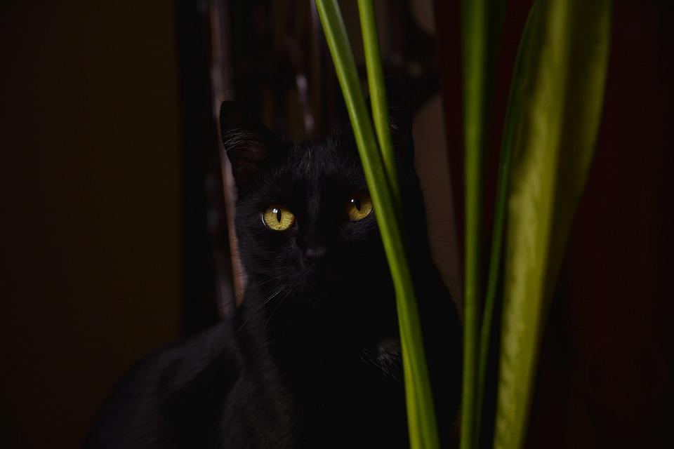 Veľká čierna mačička fotky Ázijská žena porno video