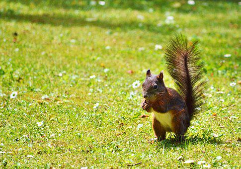 Squirrel, Nager, Rodent, Cute, Nature