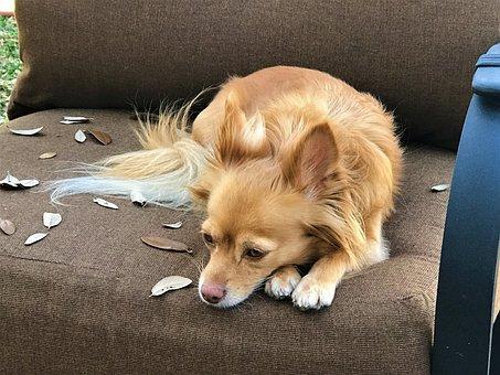 Dog, Brown, Sad, Pet